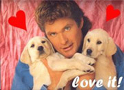 hasselhoff and puppies, oh my!  courtesy of flickr.
